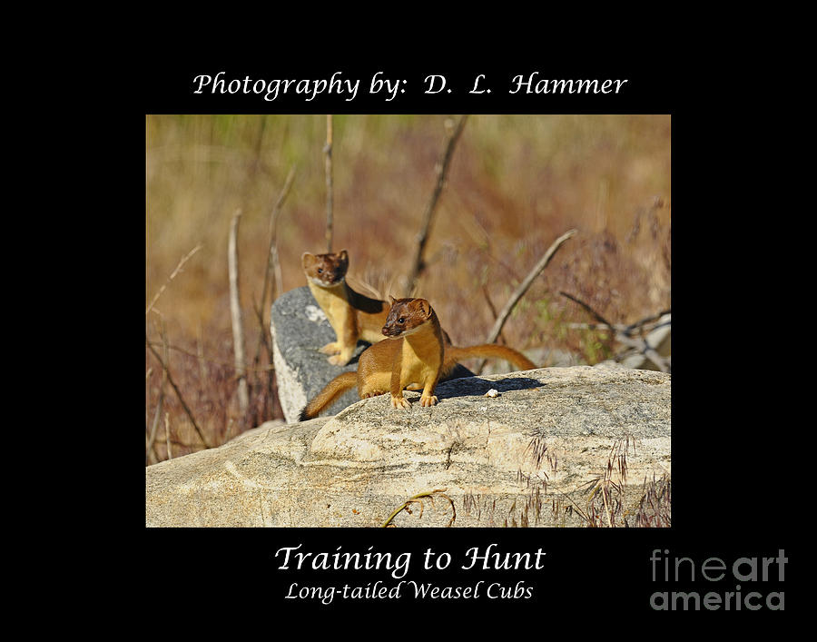 Wildlife Photograph - Training To Hunt by Dennis Hammer