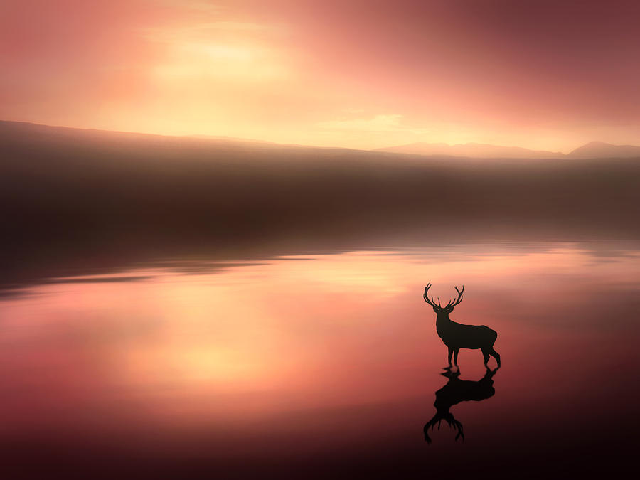 Stag Digital Art - Tranquil Dawn by Jennifer Woodward