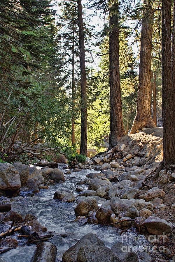Scenery Photograph - Tranquil Forest by Peggy Hughes