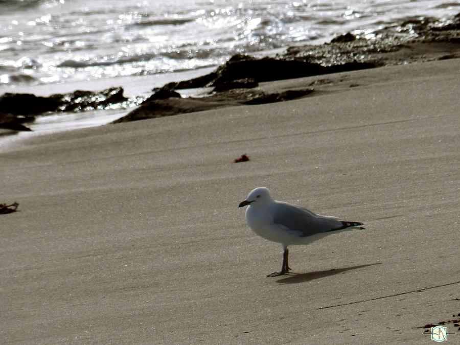 Seagull Photograph - Tranquil by Henry Nguyen