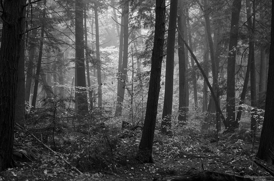 Woods Photograph - Tranquil Woods by Eric Dewar