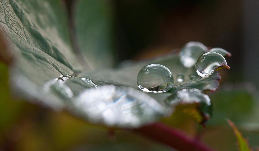 Rain Photograph - Translucent by Sabine Edrissi