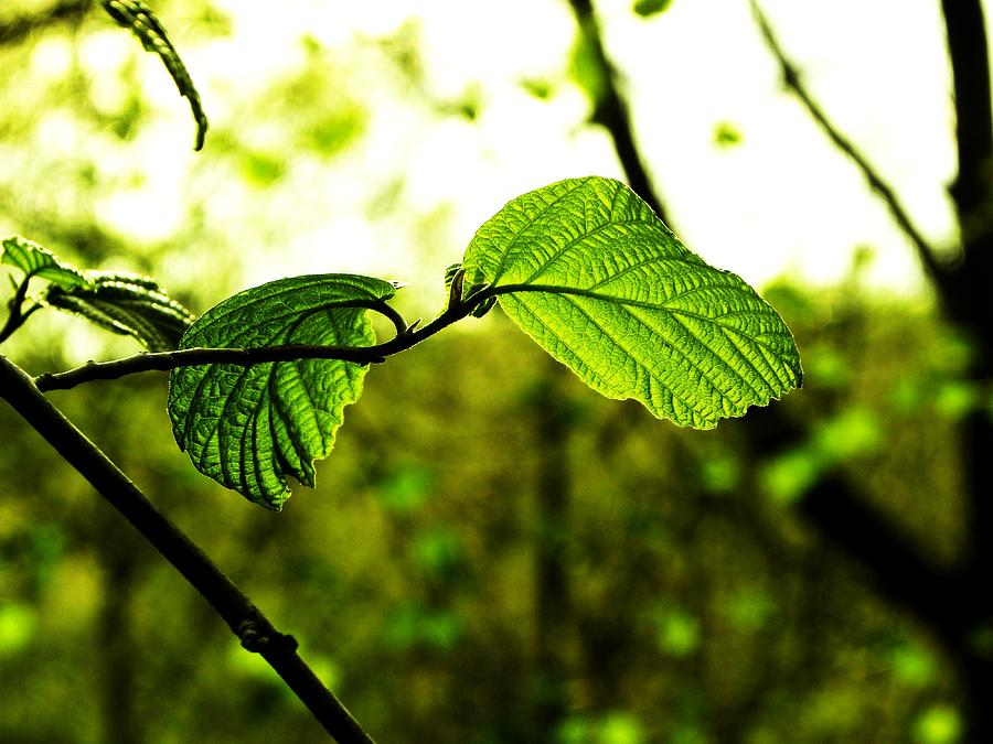 Spring Photograph - Transparent by Christian Rooney