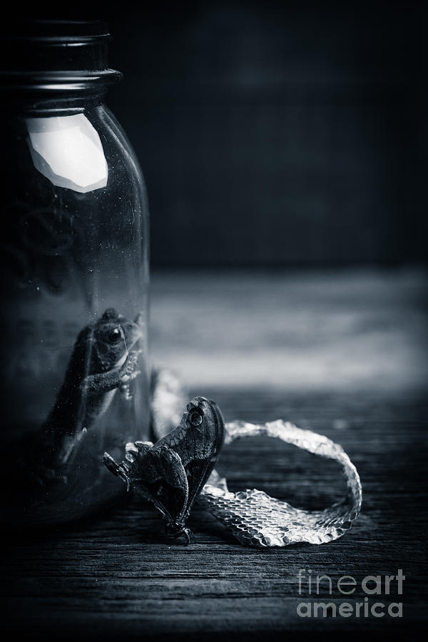 Frog Photograph - Trapped by Edward Fielding