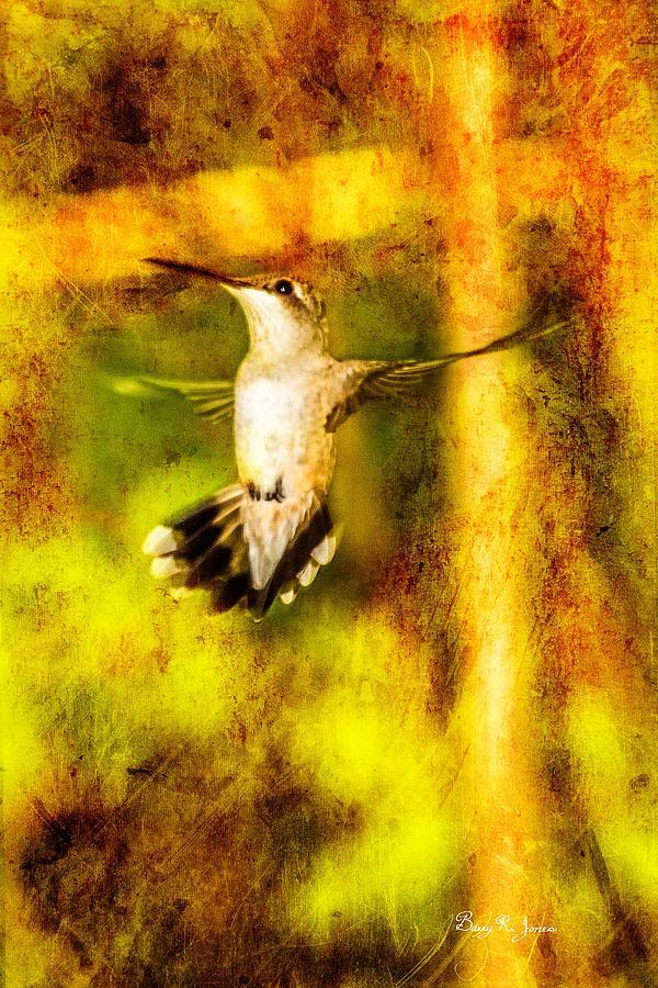 Hummingbird Photograph - Hummingbird - In Flight - Treading Air by Barry Jones