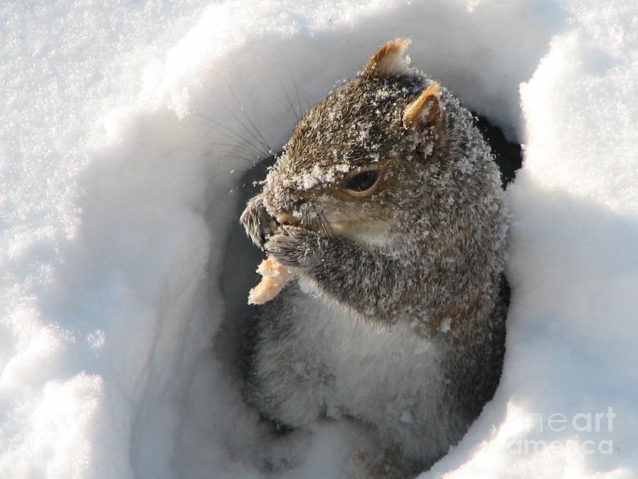 Squirrel Photograph - Treasure Found by Roxy Riou