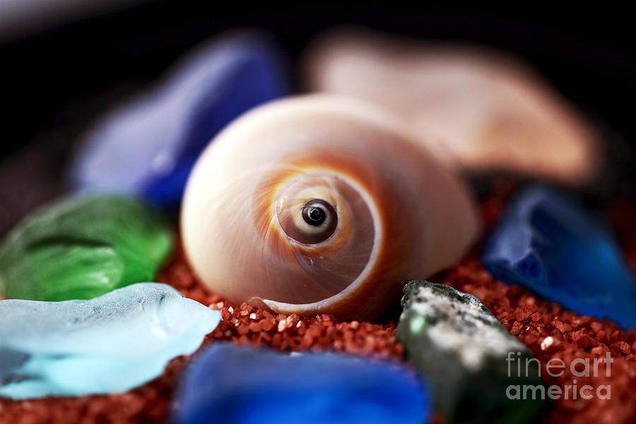 Shell Photograph - Treasures by John Rizzuto