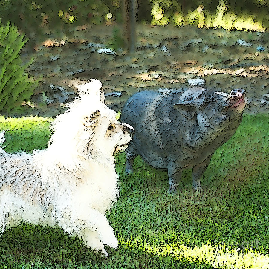 Pig Photograph - Treats For Woody And Schnitzel by Artist and Photographer Laura Wrede
