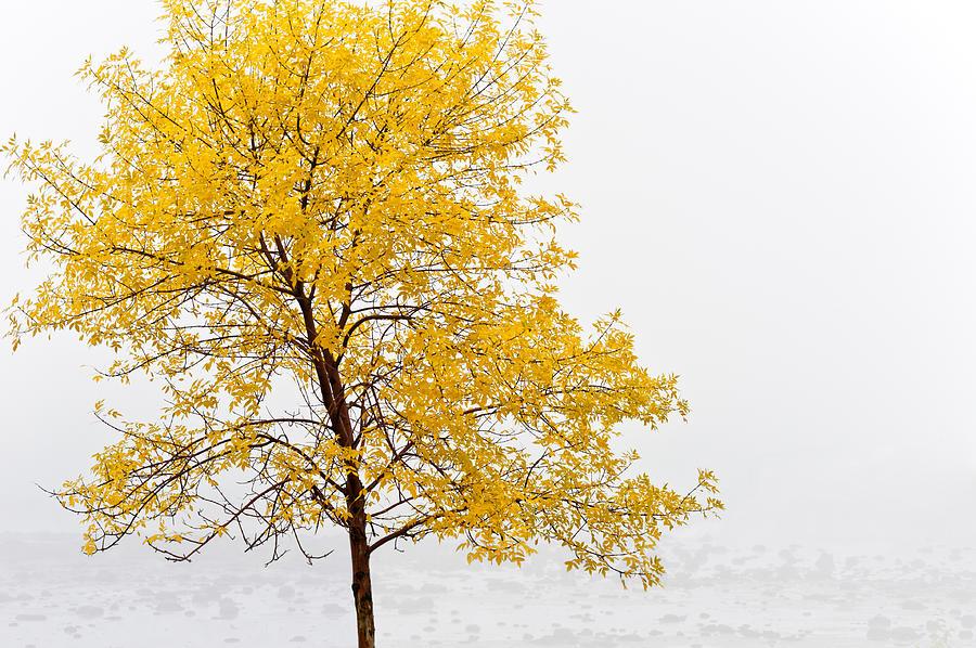 Autumn Photograph - Tree by U Schade
