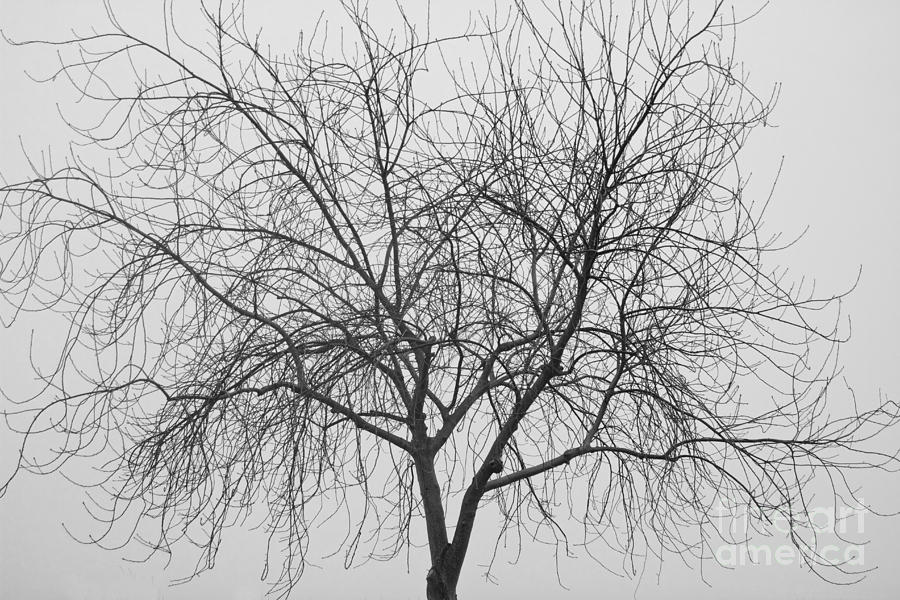 Tree Abstract In Black And White Photograph by James BO ...