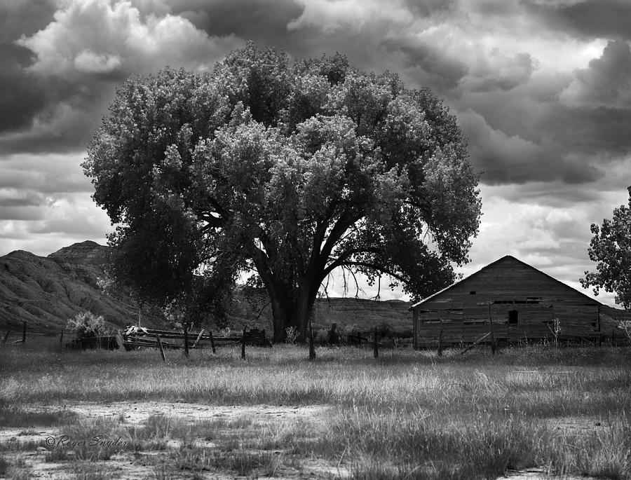 Beautiful Photograph - Tree And Barn 1 Bw by Roger Snyder