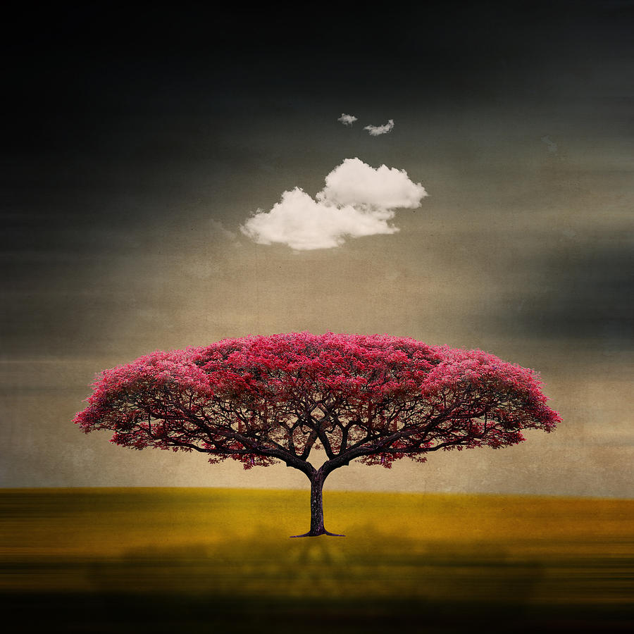 Tree And Clouds Photograph by Philippe Sainte-laudy Photography