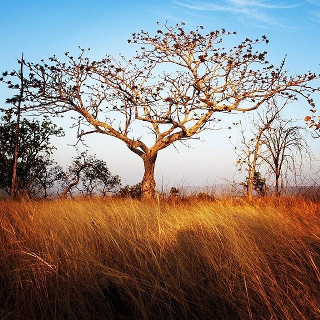 Grass Photograph - Tree And Grass by Hitendra SINKAR