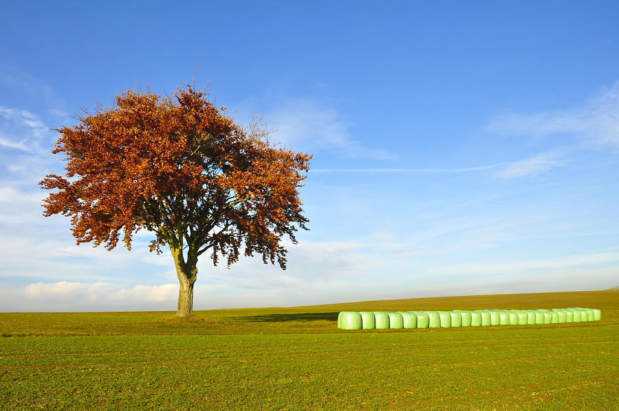Agriculture Photograph - Tree And Hay Bales by Aged Pixel