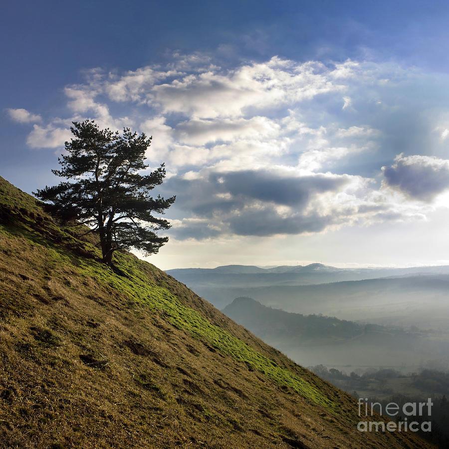 Outdoors Photograph - Tree And Misty Landscape by Bernard Jaubert