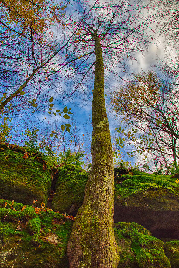 Forest Photograph - Tree And Rocks by Guy Whiteley
