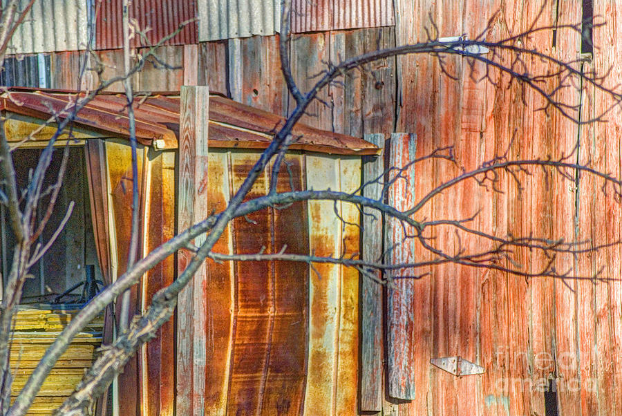 Tree Photograph - Tree And Rust by Jim Wright