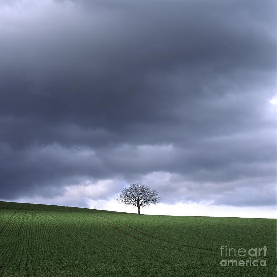 Outdoors Photograph - Tree And Stormy Sky  by Bernard Jaubert