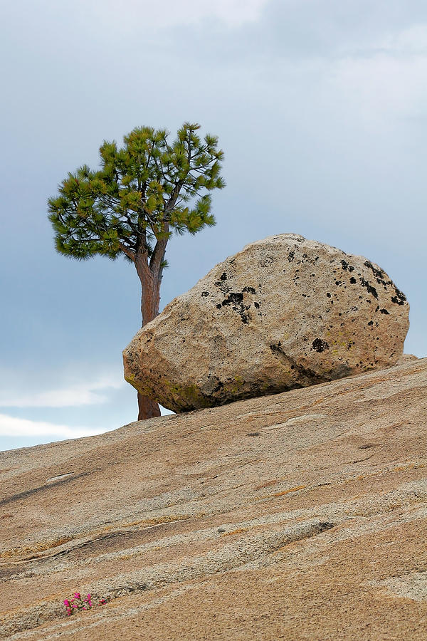 Yosemite Photograph - Tree At Olmsted Point Yosemite National Park California by Christine Till
