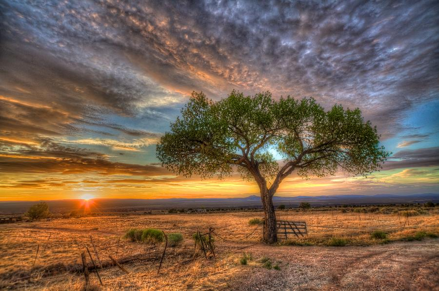 Landscape Photograph - Tree At Sunset by William Wetmore
