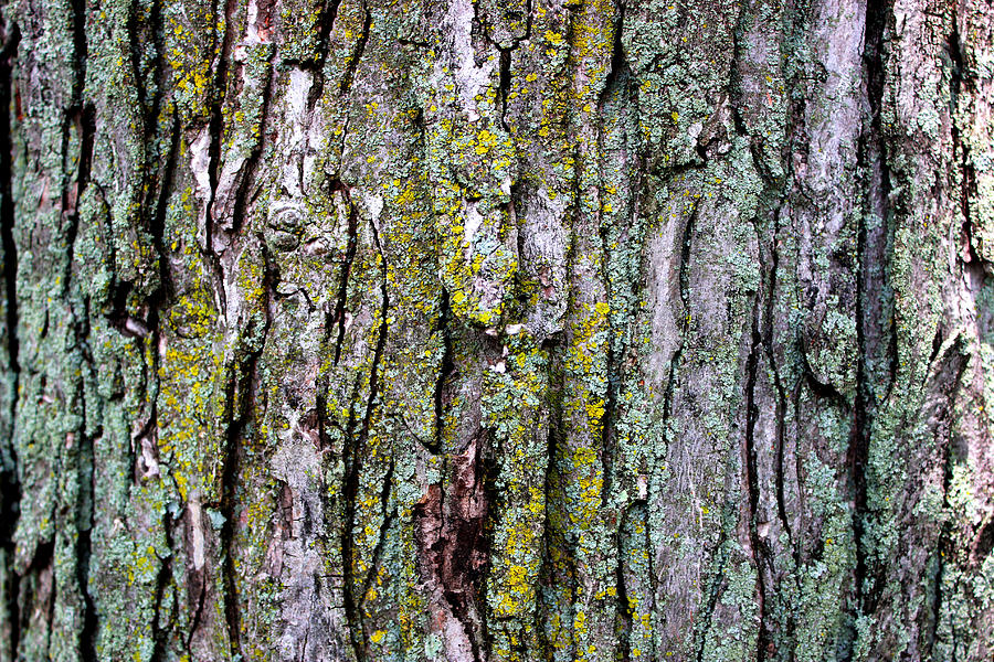 Tree Bark Detail Study Moss Nature Branches Leaves Green Mixed Media - Tree Bark Detail Study by Design Turnpike