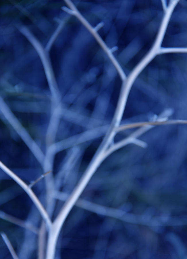 Tree Photograph - Tree Branches Abstract Blue by Jennie Marie Schell