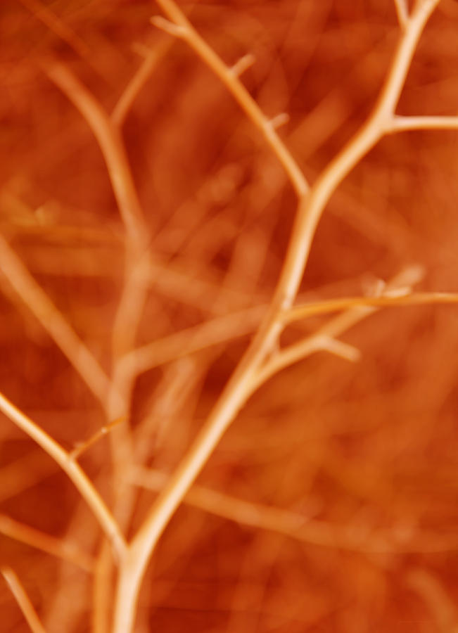 Tree Photograph - Tree Branches Abstract Orange by Jennie Marie Schell