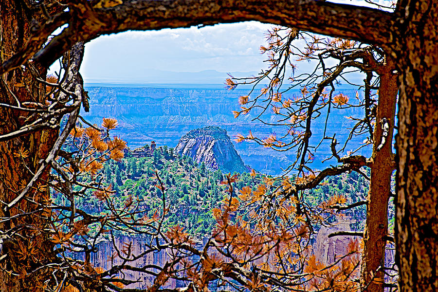 Tree Branches Frame Transept Trail View On North Rim-grand Canyon ...