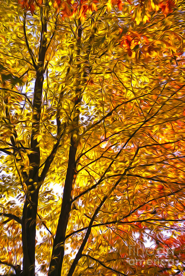 Trees Digital Art - Tree Brightness by Nur Roy