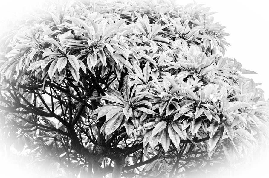 Tree Photograph - Tree Bush Vignette by Lisa Cortez