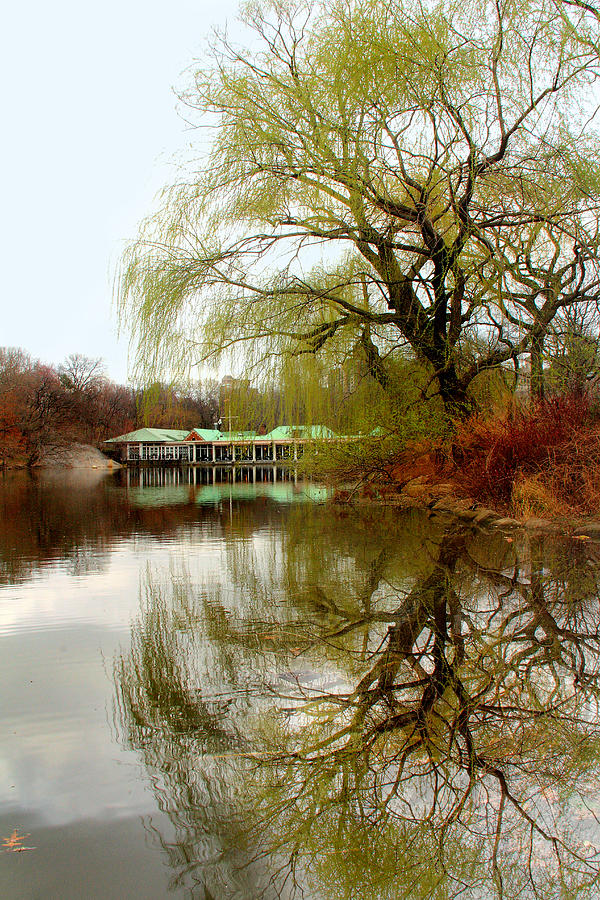 Tree  Photograph - Tree By The River  by Mark Ashkenazi