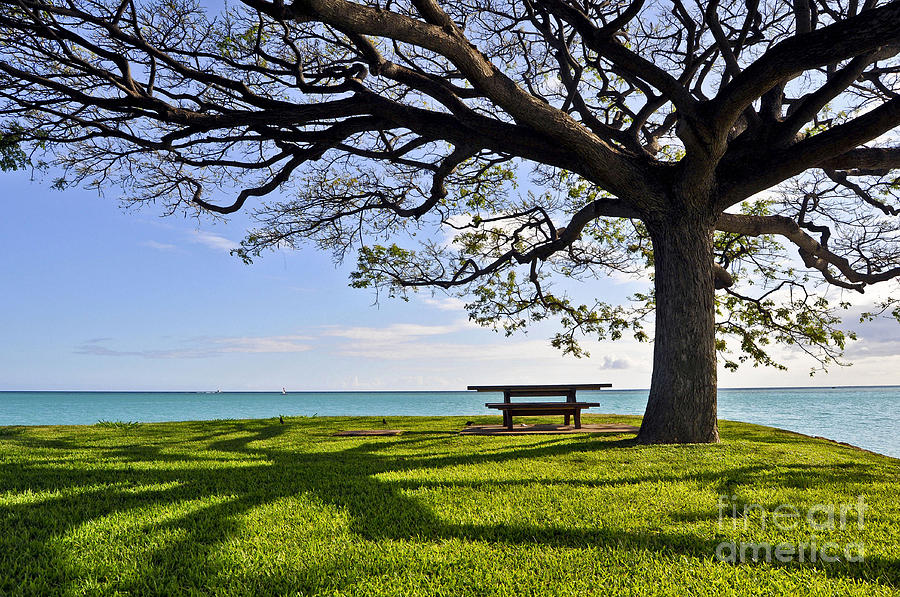 Ocean Photograph - Tree Canopy by Gina Savage