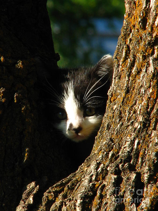 Kitten Photograph - Tree Cat by Greg Patzer
