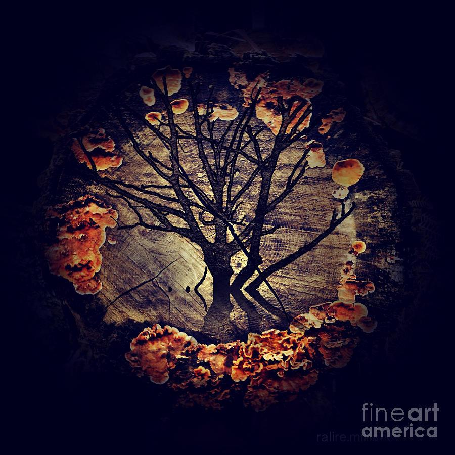 Tree Photograph - Tree Circle 2 by Milliande Demetriou