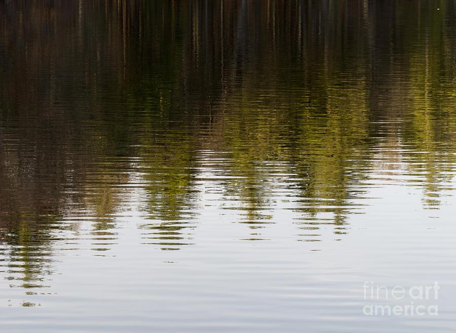 Tree Crown Photograph - Tree Crowns by Agata Wisniowska