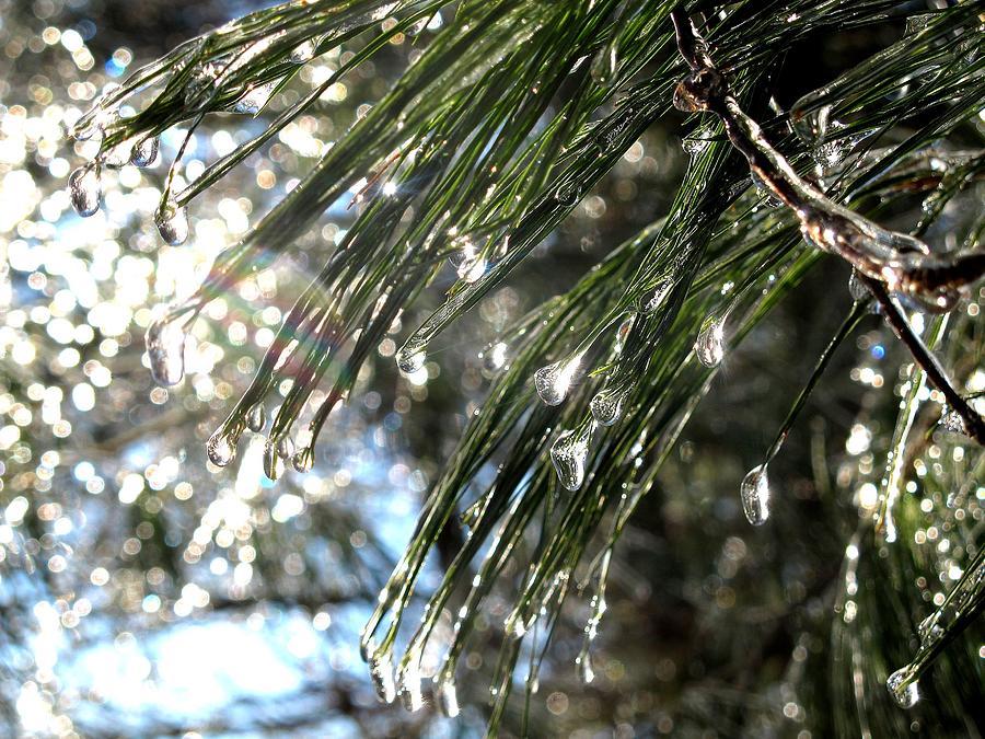 Tree Drops Photograph