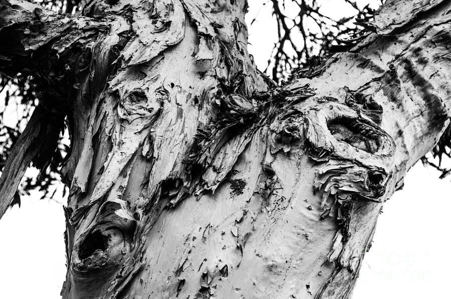 Tree Photograph - Tree Face No Color by Lisa Cortez