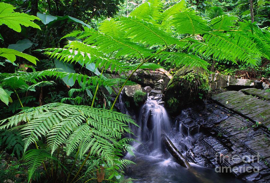 Waterfall Photograph - Tree Fern And Waterfall by Thomas R Fletcher