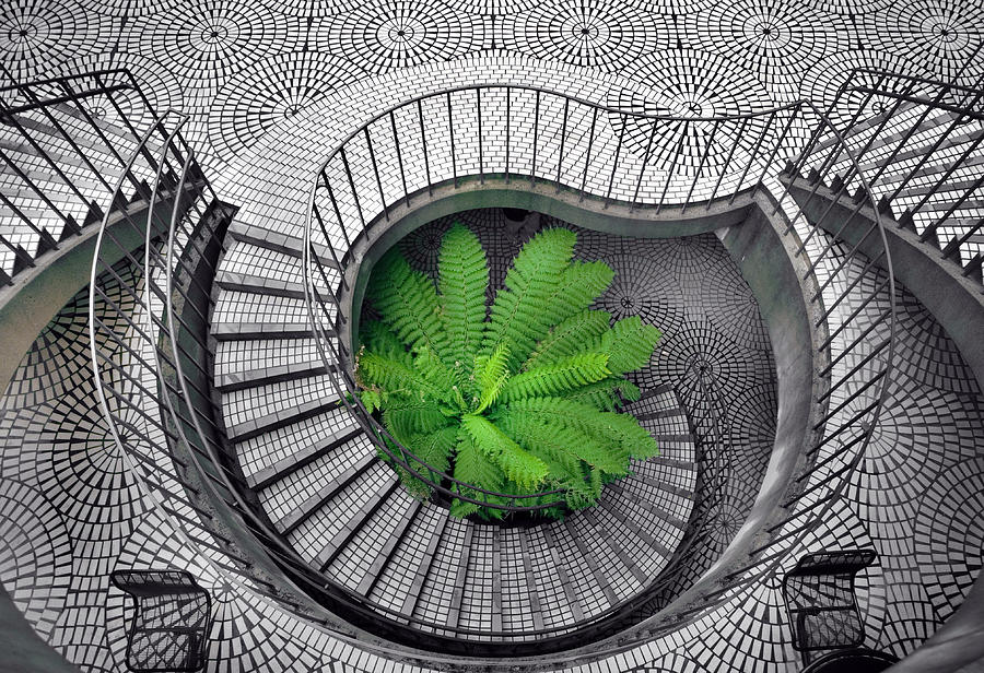 Staircase Photograph - Tree Fern In The Stairs by Daniel Furon