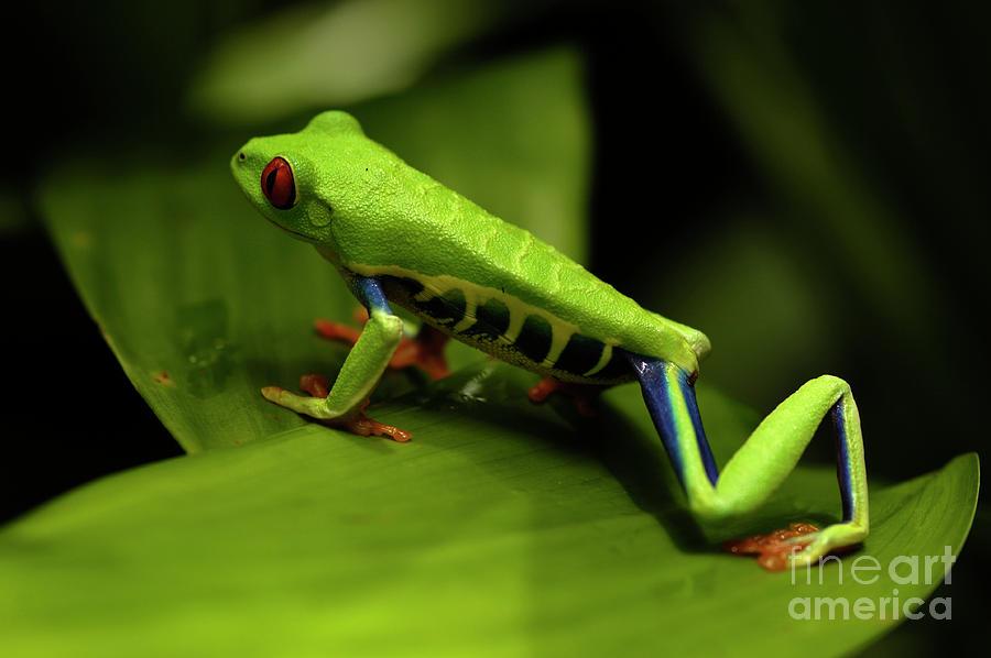 Frog Photograph - Tree Frog 12 by Bob Christopher