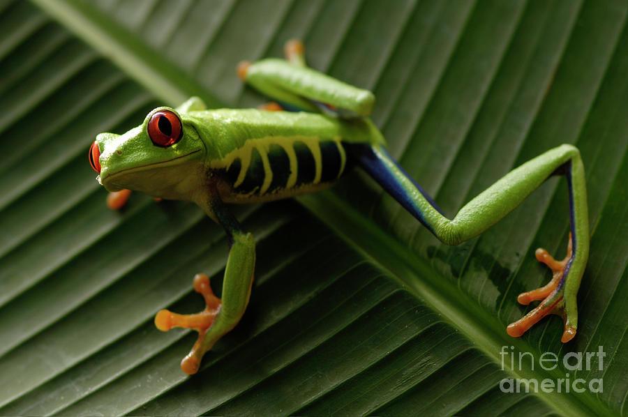 Frog Photograph - Tree Frog 16 by Bob Christopher
