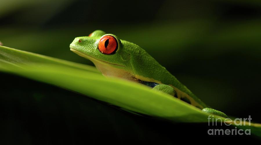 Frog Photograph - Tree Frog 7 by Bob Christopher
