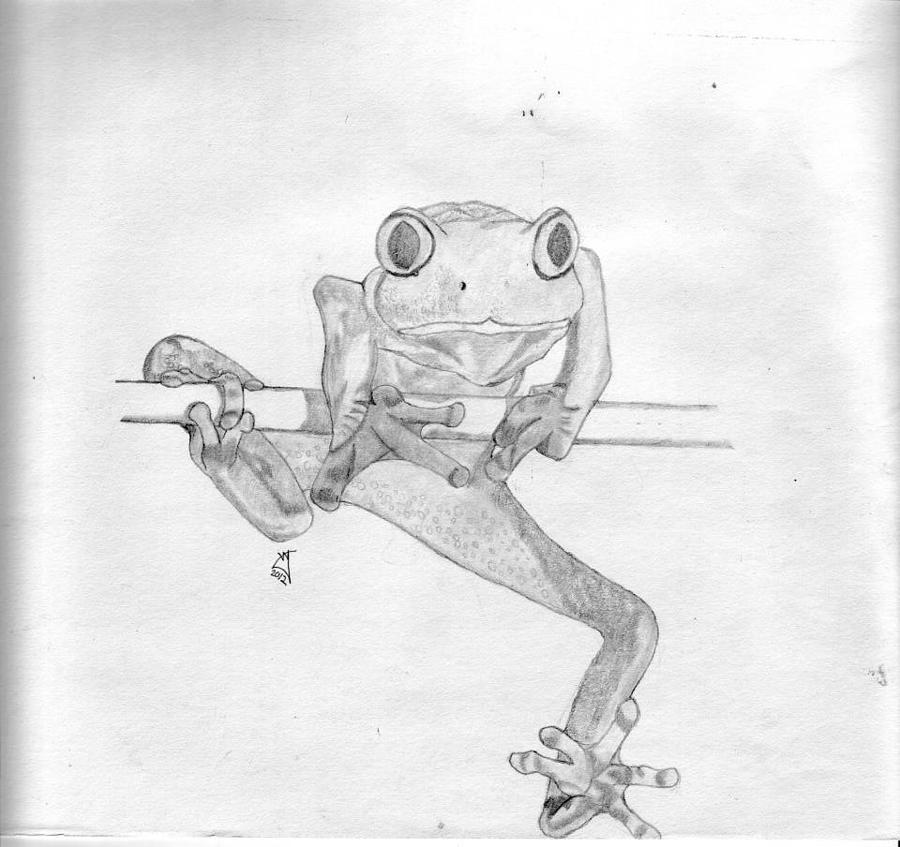 Tree Frog Drawing by Vincent Young