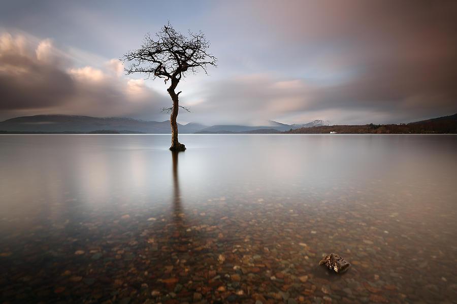 Loch Lomond Photograph - Tree by Grant Glendinning