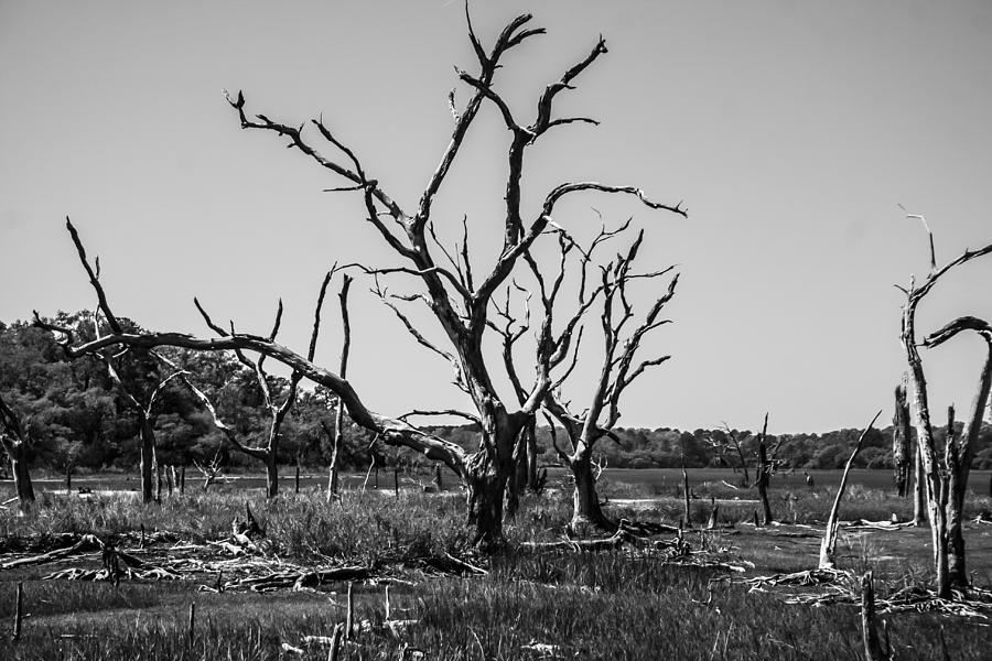 Tree Photograph - Tree Graveyard by Steven  Taylor