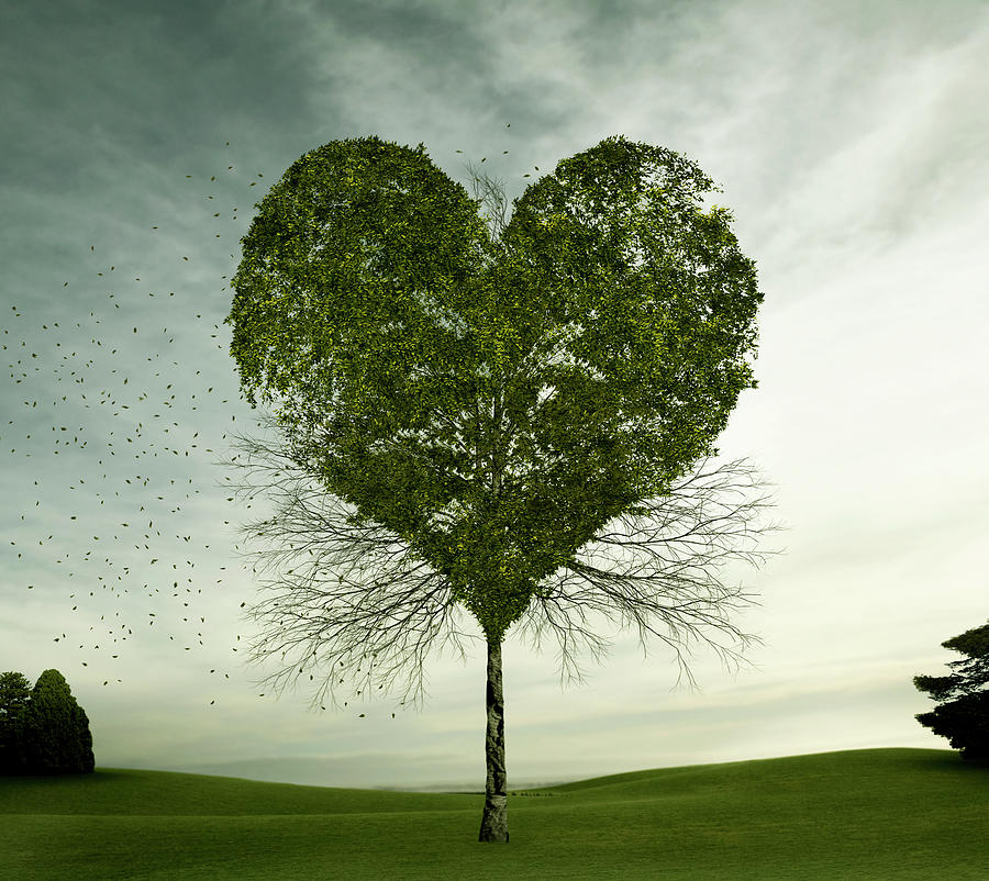 Tree Growing In Heart-shape Photograph by Colin Anderson Productions Pty Ltd