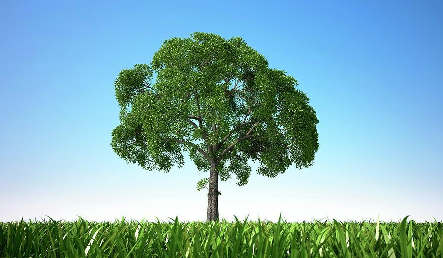 Tree In A Field, Artwork Digital Art by Leonello Calvetti