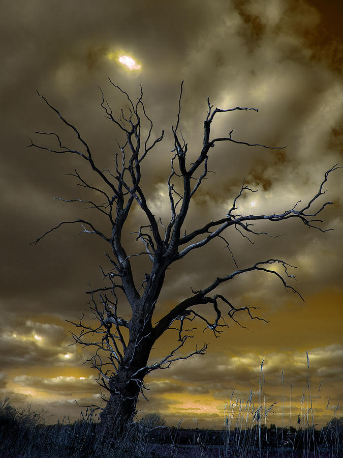 Tree Photograph - Tree In A Storm by Dale Reynolds