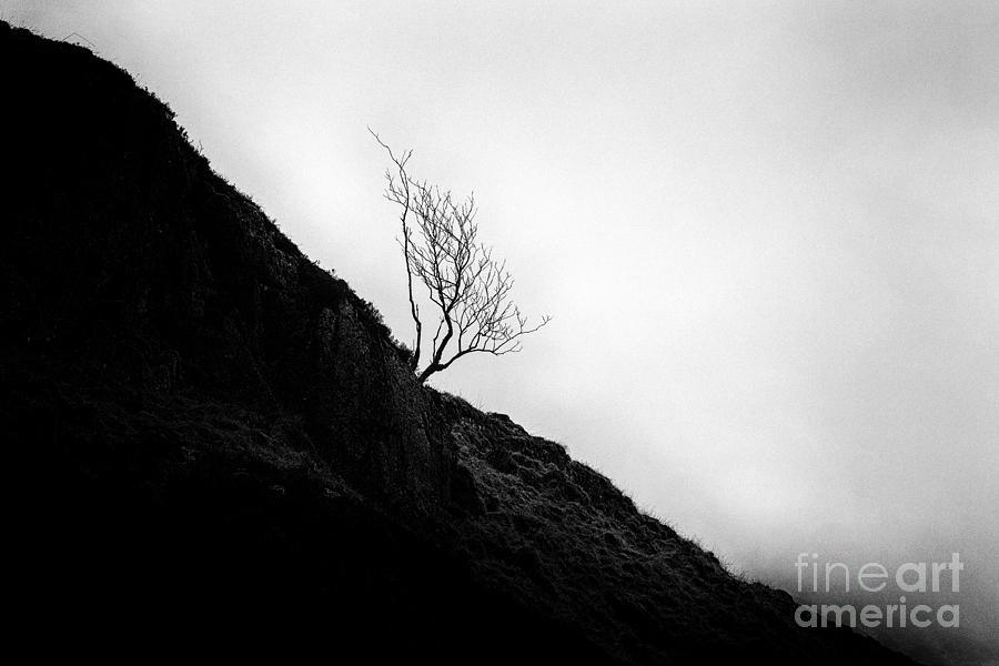 Beautiful Scotland Photograph - Tree In Mist by John Farnan