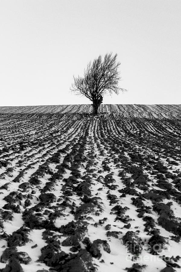 Snow Photograph - Tree In Snow by John Farnan